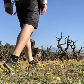 TopWineExperience - Hiking and Wine activity in Penedes, Barcelona