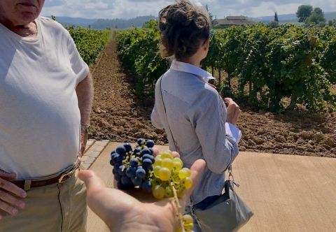 TopWineExperience - Sitges Private Premium Wine tour